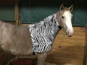faceless sleazy in crazy zebra