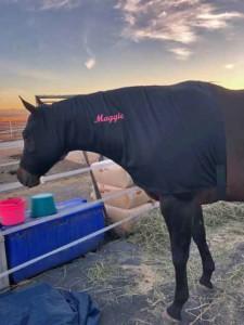 hard-wearing-horse sleazy