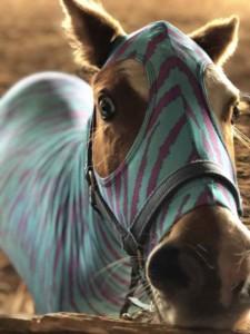 mini horse full body sleazy in aqua zebra