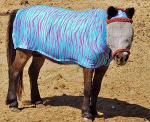 miniature horse body suit in bright aqua zebra