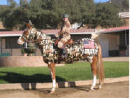 horse costumed as army tank