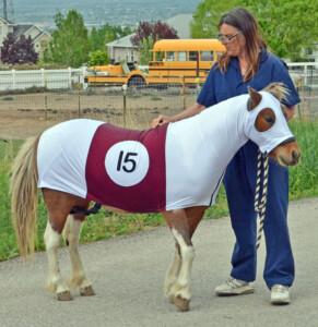 horse in costume