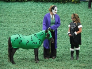 horse in riddler costume