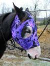 horse wearing sleezy face mask