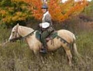 robin hood horse costume