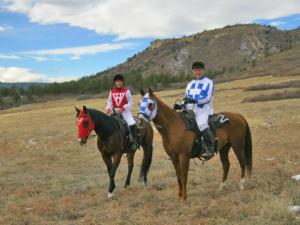 horse costumes