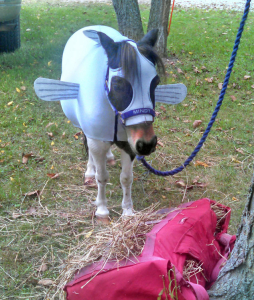 mini horse dressed in minnow costume