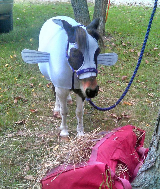 Mini Horse Parade Costumes - Miniature Horse Forum - Lil ...   Mini Horse Costume