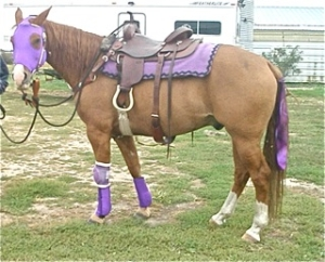 horse wearing sleezy face mask and matching boot covers