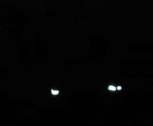 horse leg reflectors
