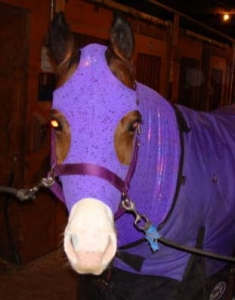 horse wearing purple sleazy jammies
