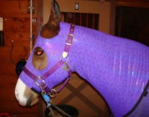 horse wearing purple slinky