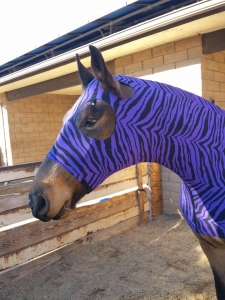 horse wearing full body sleazy in purple zebra print.