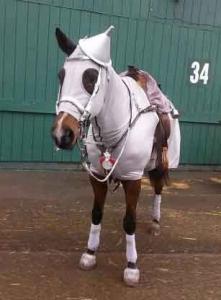 Horse Costume Designs That Are Unique