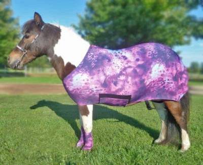 miniature horse lycra body sleazy