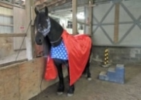 Horse wearing super hero costume