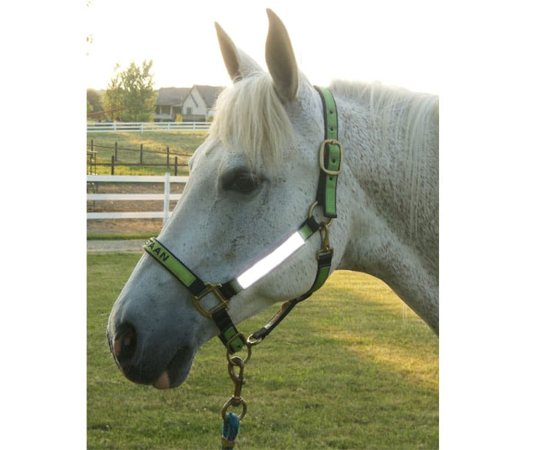 high visibility halter bridle reflectives