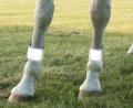 high vis horse reflective leg bands
