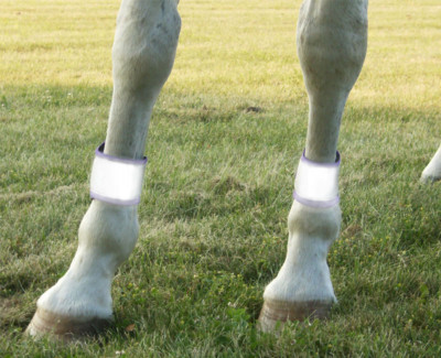 high vis horse reflective leg bands