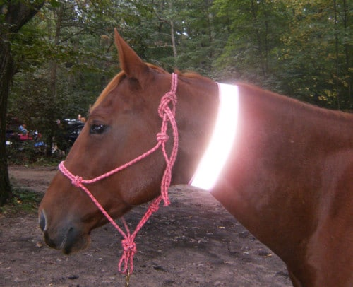 high visibility horse reflective neck band