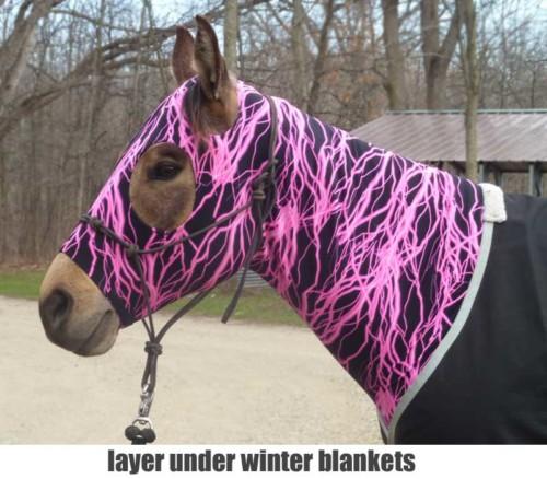 horse sleezy