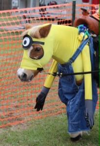 horse costumes minion