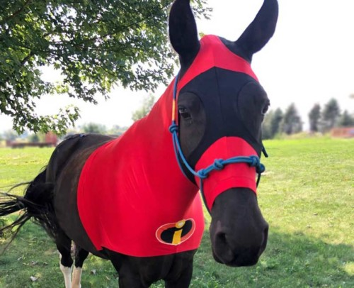 halloween costumes for horses the incredibles