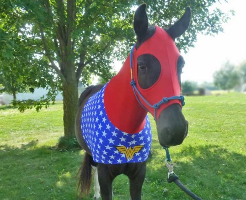 wonder woman horse costume