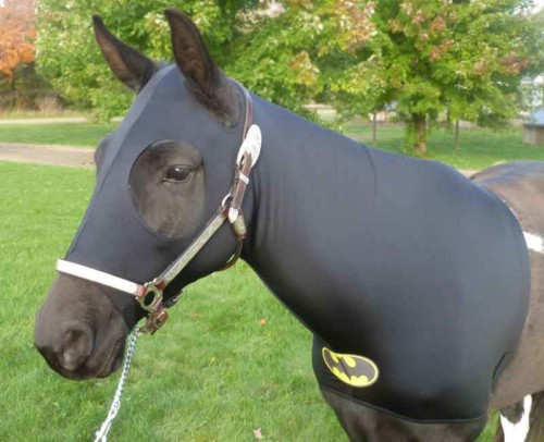 halloween costumes for horses Batman
