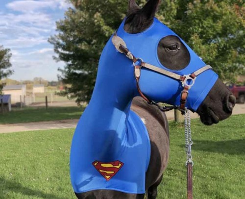 Halloween costumes for horses superman