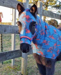 miniature horse wearing a sleazy in Spiderman print