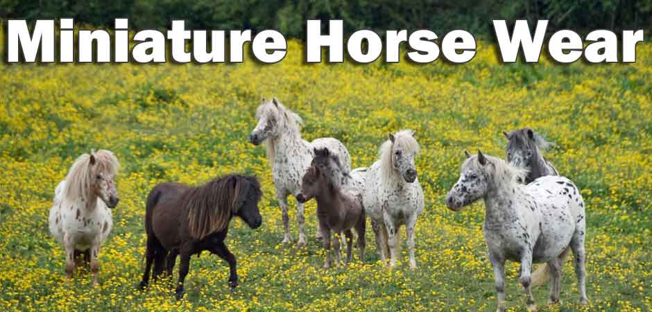 miniature horse clothing