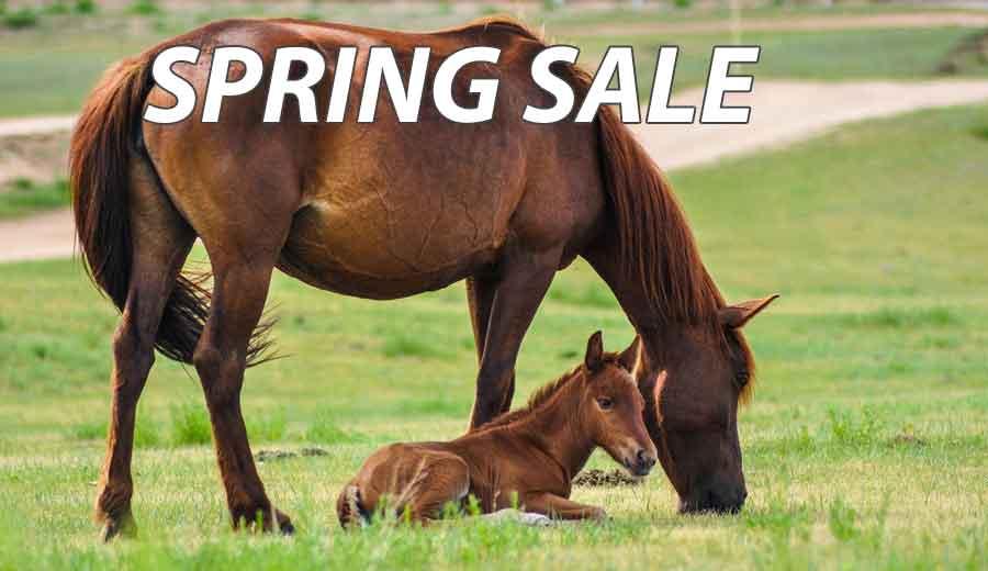 horse sleazy slinky sale