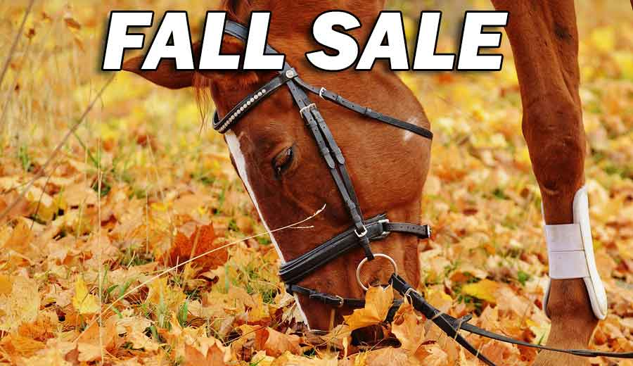 Fall Sale of Horse Sleazys