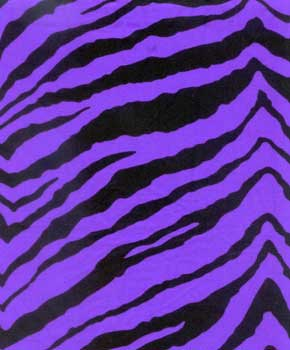 Zebra-Purple